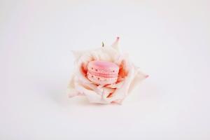 rose1_scene